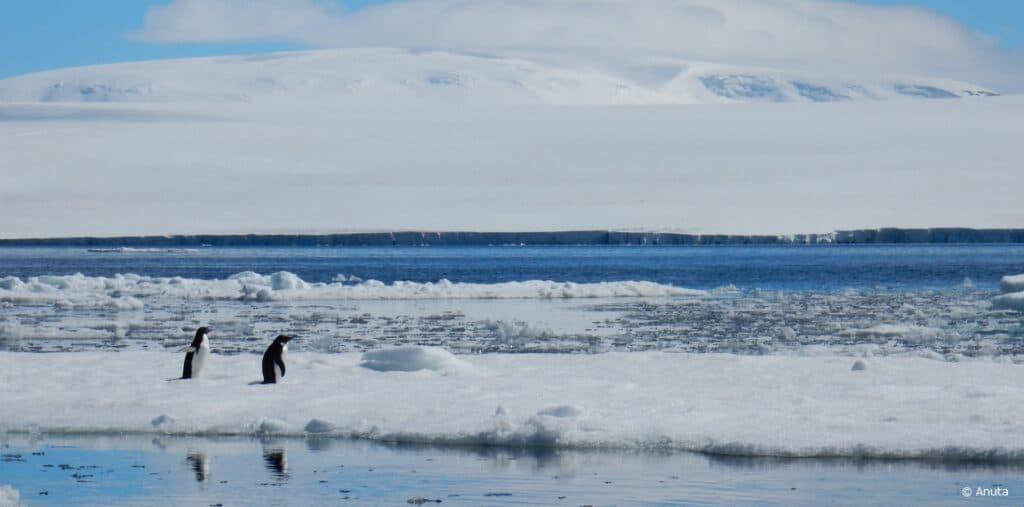 Penguins in the snow Antarctica