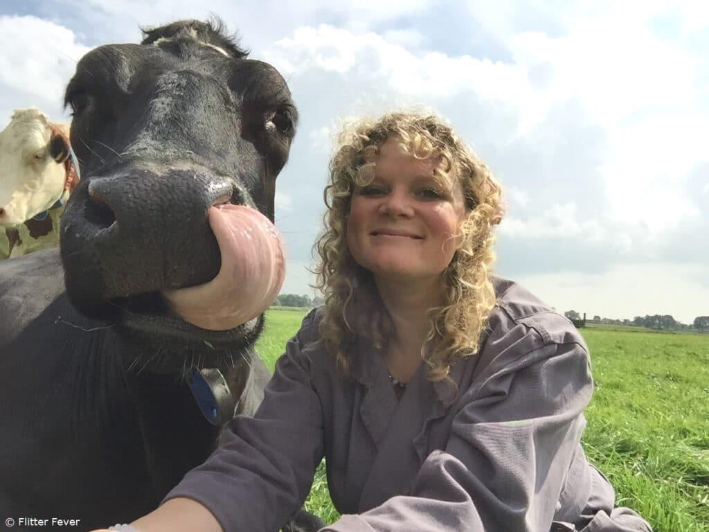 Cow tongue nostril selfie Netherlands Holland