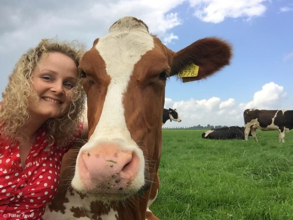 best buddies selfie cow koeknuffelen beets nederland holland koe netherlands