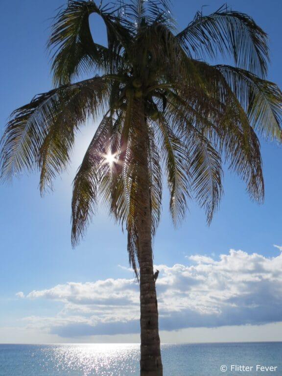 Woodpecker in palm tree Maria La Gorda Cuba