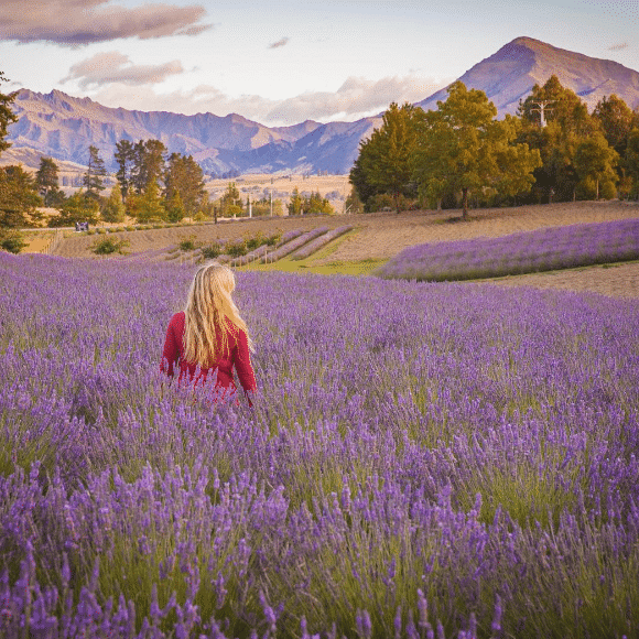 Liz at a lavender farm near Lake Wanaka (NZ)