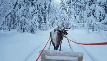 788d399dcf7 The 10 best activities to do in the Kittilä Levi area of Finnish Lapland