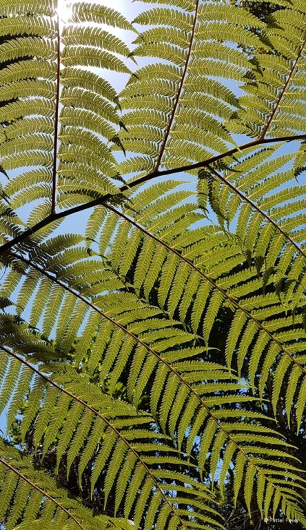 Ferns at Cathedral Cove Walk Coromandel Peninsula