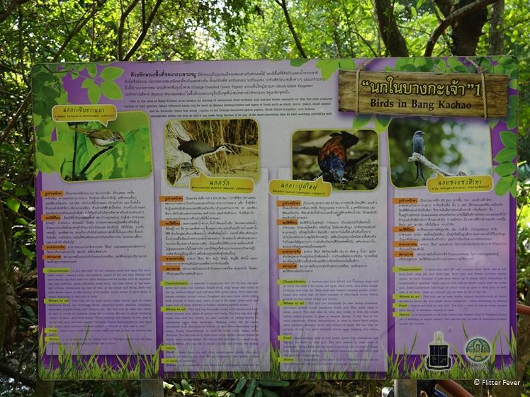 Birds in Bang Kachao Sri Nakhon Khuean Khan Park and Botanical Garden