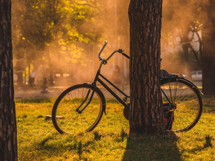 Bicycle parked against a tree Krasnodar