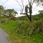 Downed Trees After Hurricane Richard