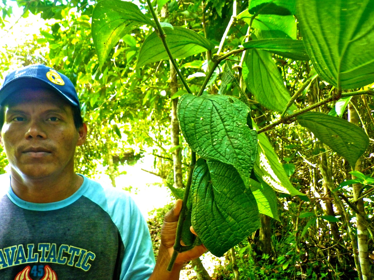 One of our Curandero Friends Showing a Plant Used for Treating Fever