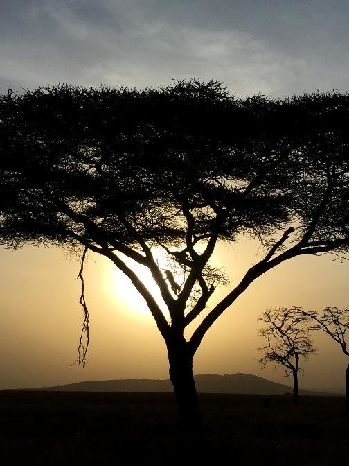 The Serengeti National