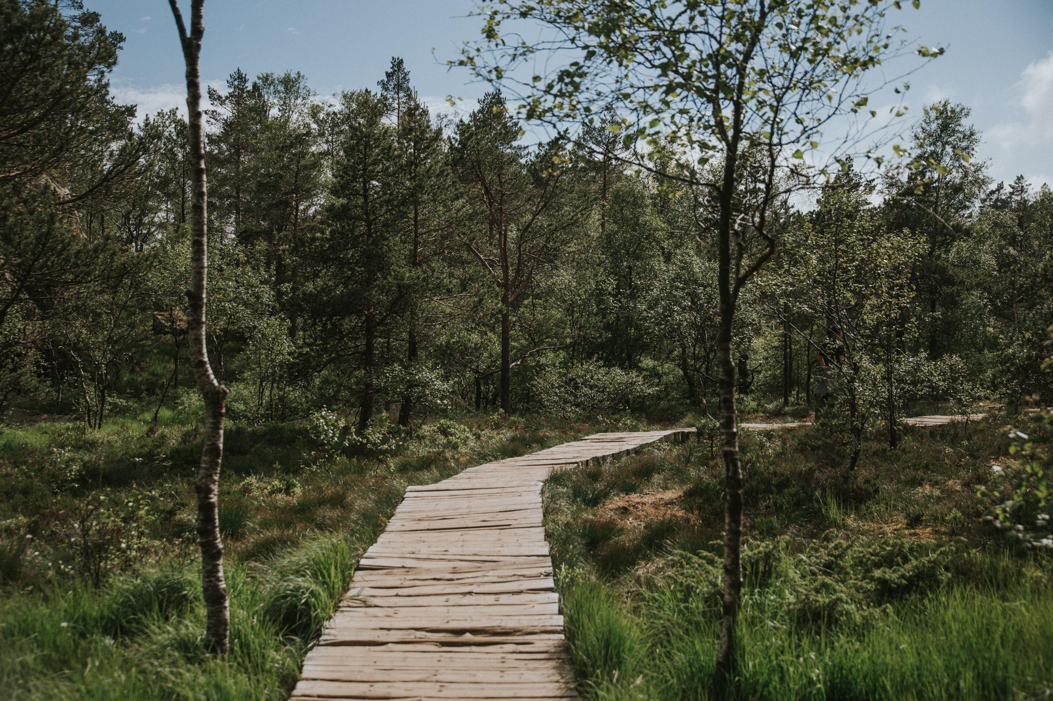 preikestolen-norwegia-trekking-szlak