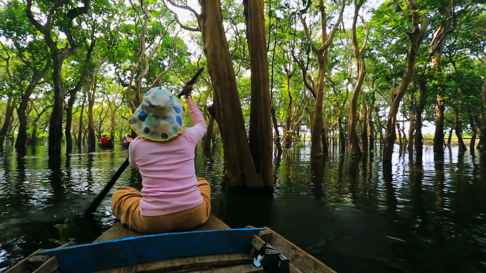 Flooded Forest Canoe