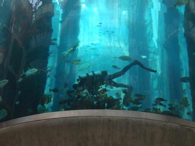 Aquarium-In-Radisson-Sas-Hotel-4