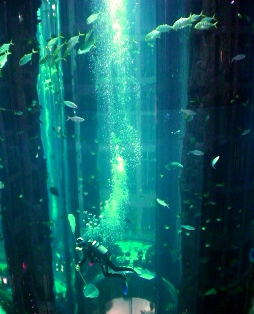 Aquarium-In-Radisson-Sas-Hotel-9