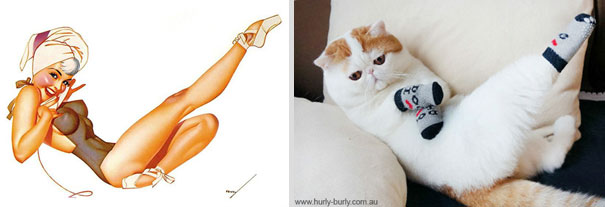 cats-that-look-like-pin-up-girls-4