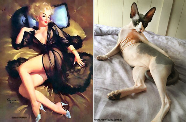 cats-that-look-like-pin-up-girls-8