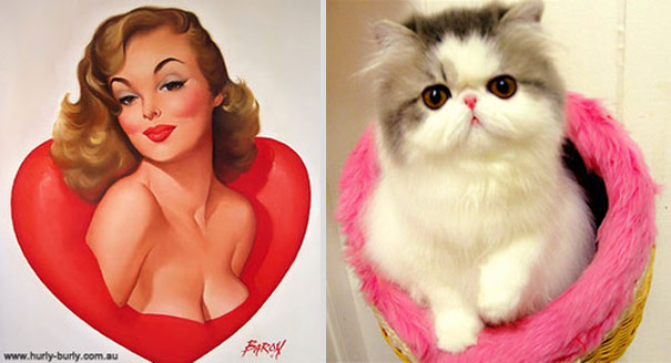 cats-that-look-like-pin-up-girls-9
