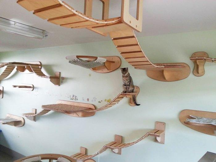 人貓共生空間