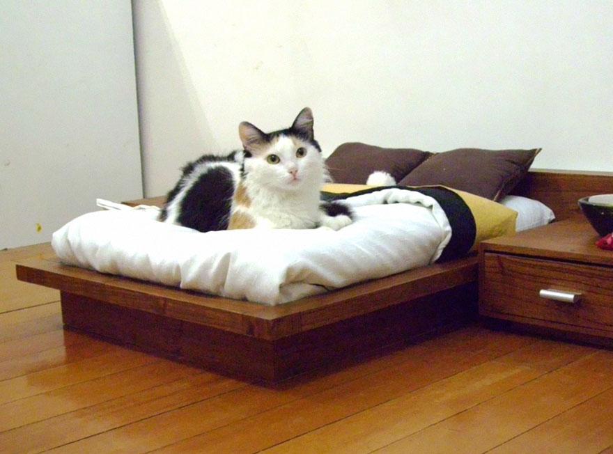 25 個愛貓人士不能錯過的喵星人傢俱