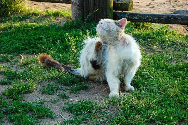 In 3 Schritten Katzenflöhe Bekämpfen Vorbeugen