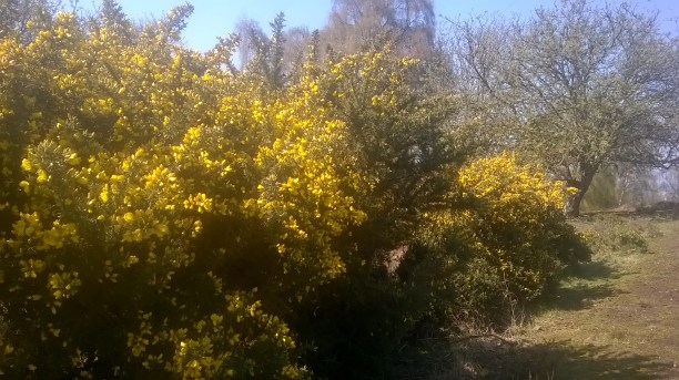 Everything was looking very yellow!