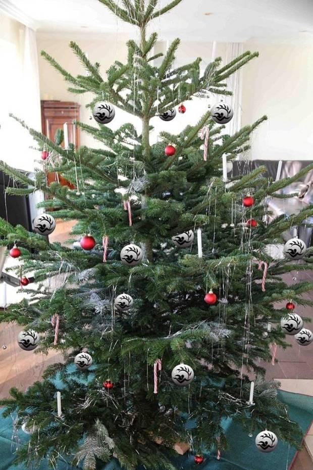Das ist der Baum von Lars!!
