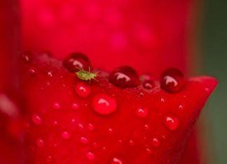 Conoce el ciclo de vida de los insectos y reduce los pesticidas