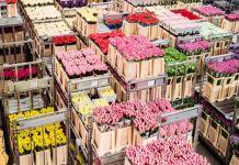 Exportadores de flores de Ecuador necesitan nuevos acuerdos comerciales