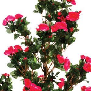 Azalée en Pot Lucile Rose H81cm