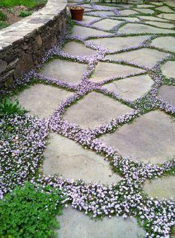 sweet-garden-path-ground-cover