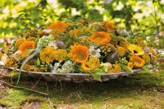 Sunflowers ( Helianthus ) in a sunny arrangement.