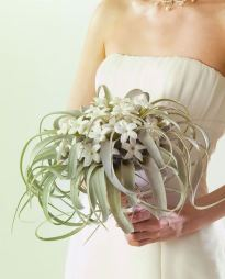 Tillandsia and Stephanotis flowers.
