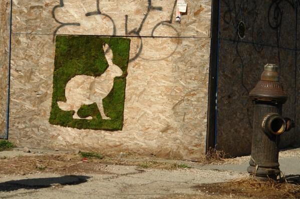 moss_rabbit-brooklyn