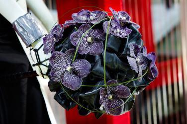 Vanda-Orchids