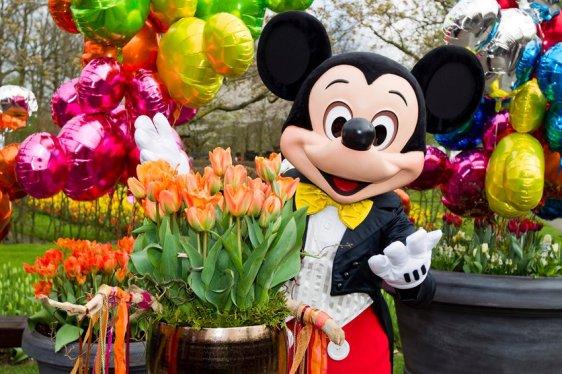 Disneyland Paris Tulips.