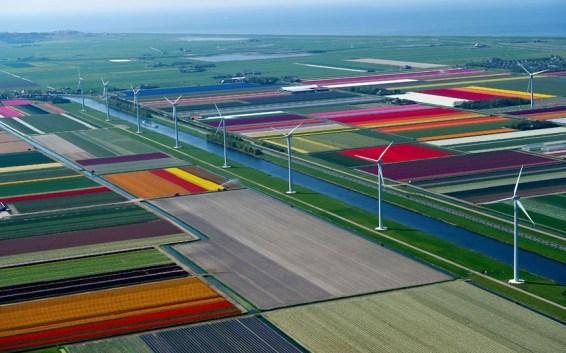 tulips-cala-turbin_2470270k