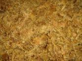 Sphagnum Moss Chile