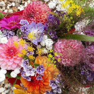 Summer dahlia bunches