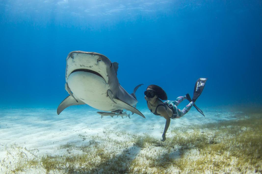 Interview with Shark Activist Madison Stewart
