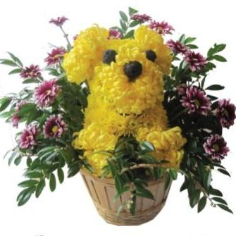 yellow dog in basket