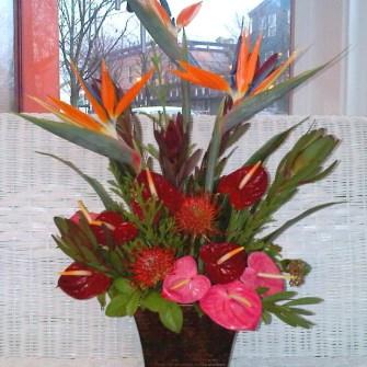 Medium tropical arrangement