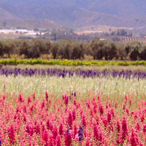 Floral Treasure Flower Farm Field
