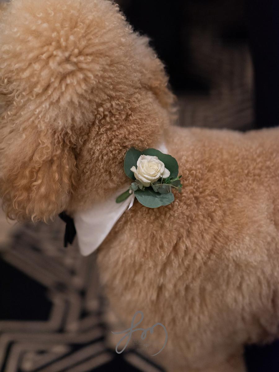 moraya + dutch wedding dog