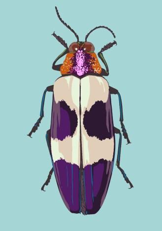 Pink headed jewel beetle