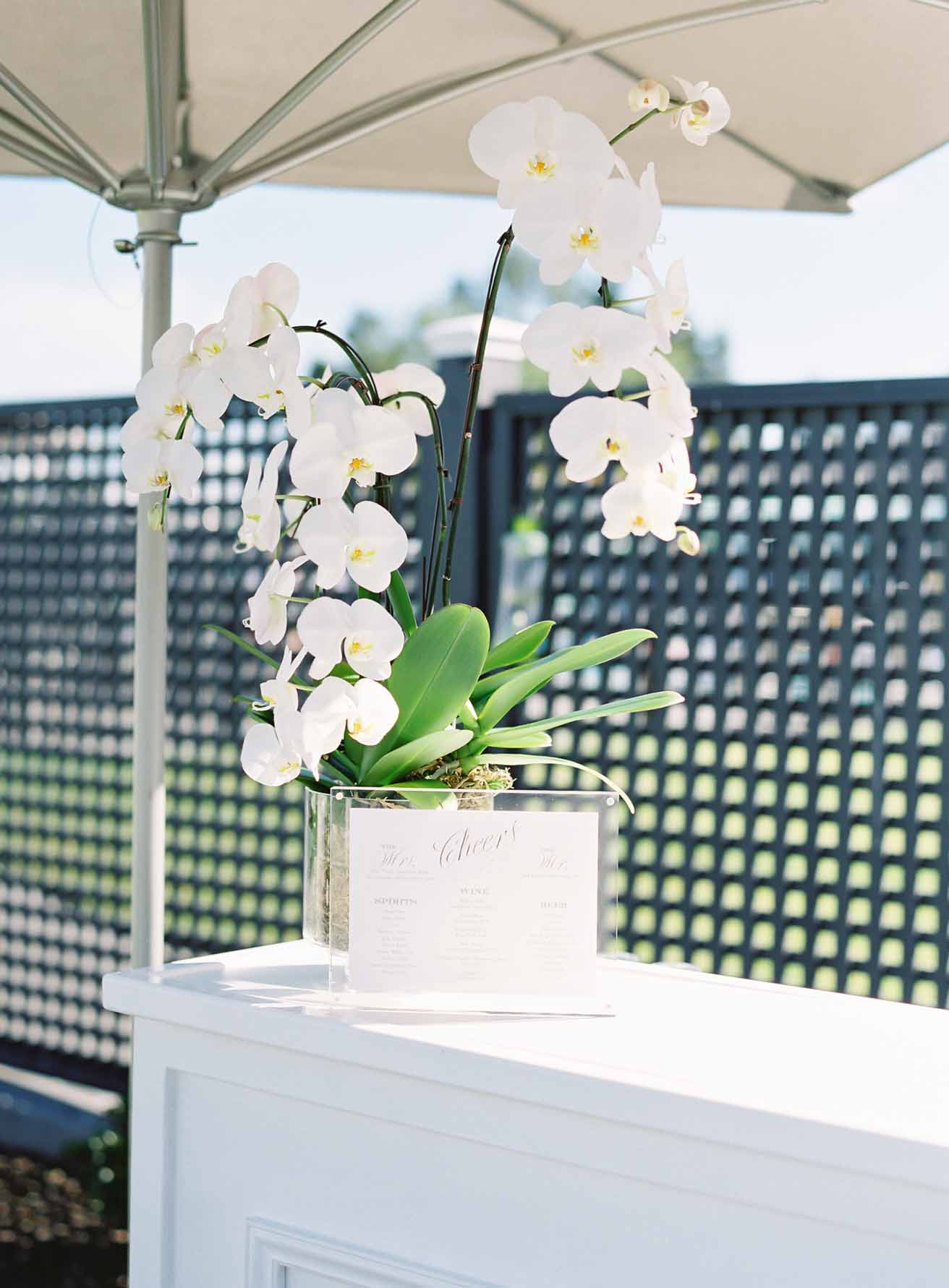 Potted white orchid as cocktail bar decor for wedding