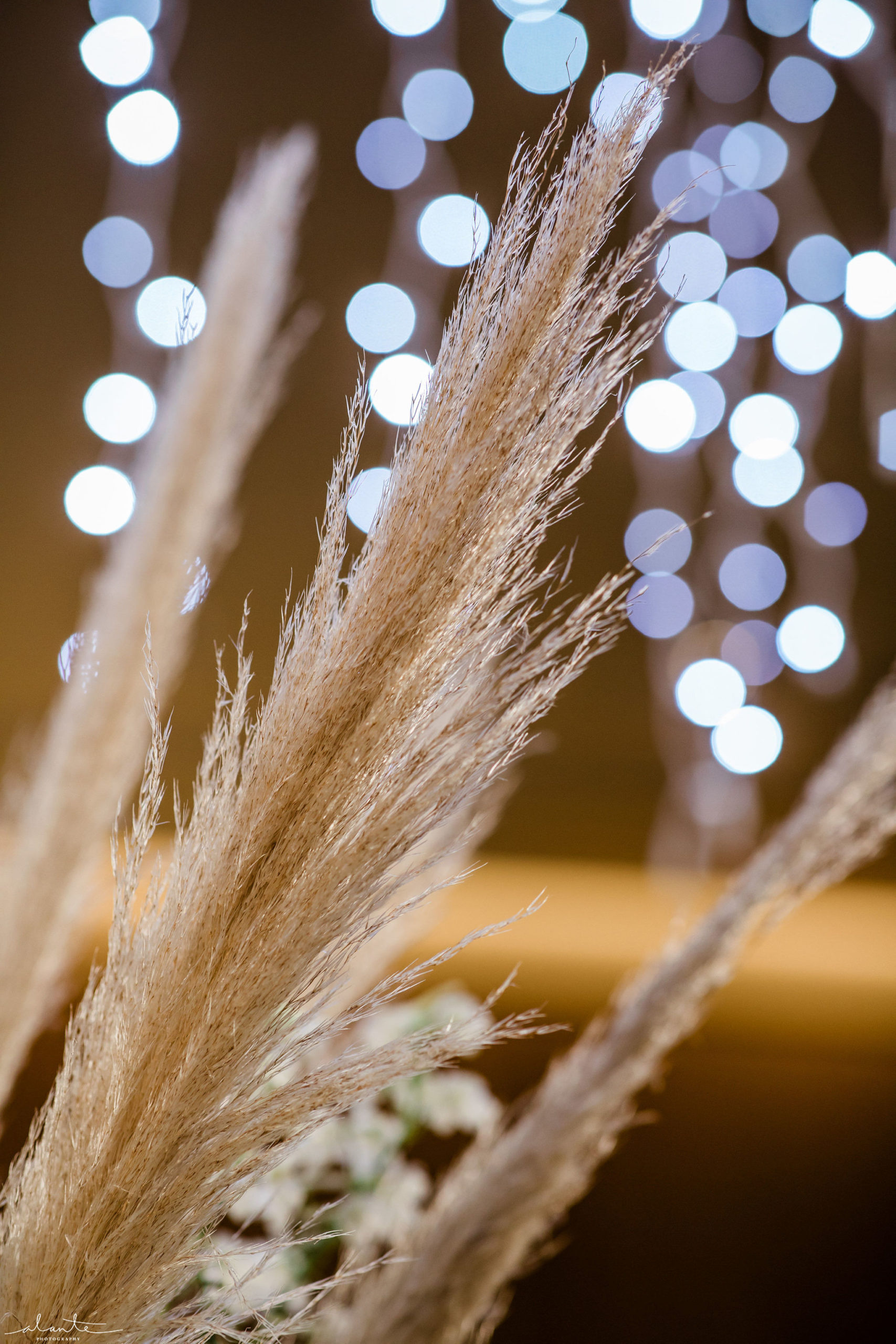 Pampas grass wedding under holiday light chandelier for a winter ceremony.