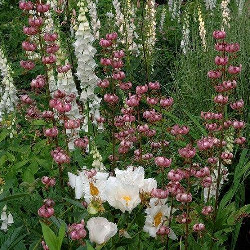 martagon, bazsarózsa és gyűszűvirág