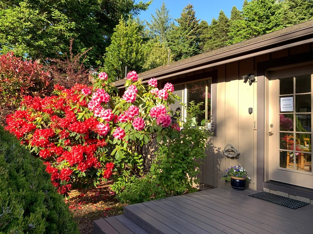 Rhododendron and more blooming in the spring