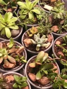 succulents kansas city florist kansas city florist