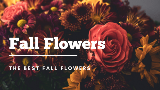 Fall flowers with florativity Fall flowers for kansas city weddings fall kansas city wedding fall wedding kansas city flowers