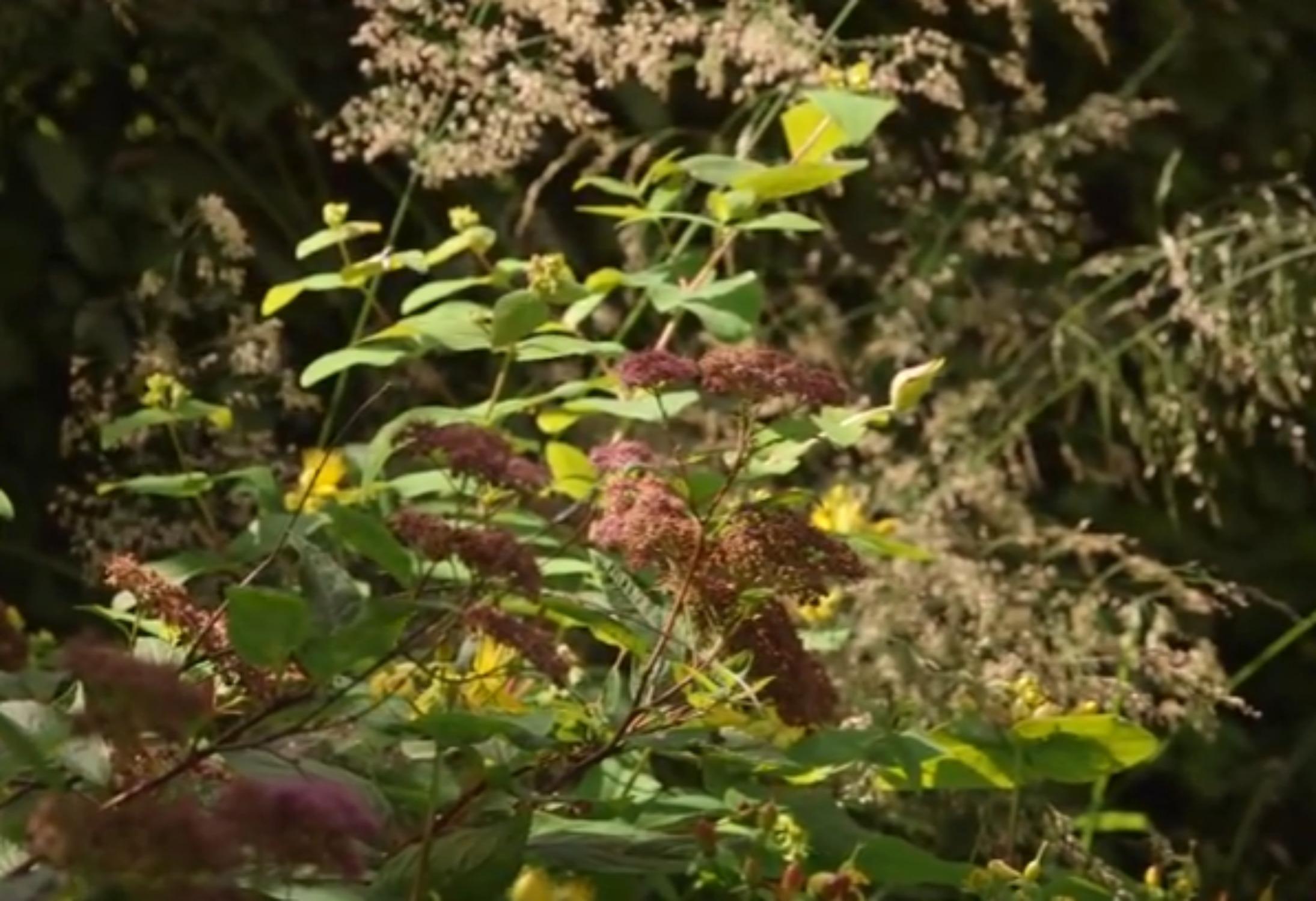 Jardins et gens du Nord : le jardin des fées