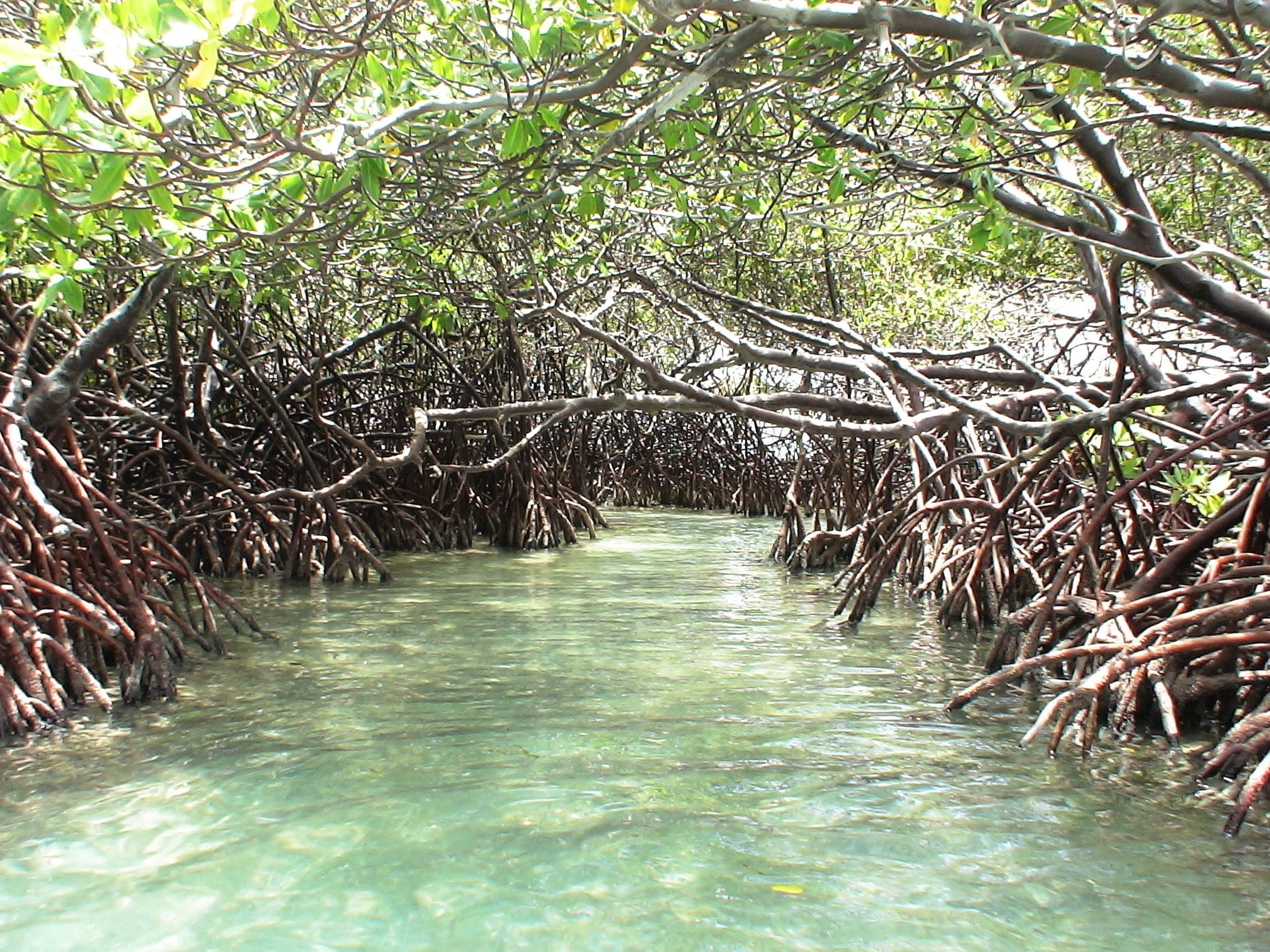 Mangroves – Guardians of the Coast